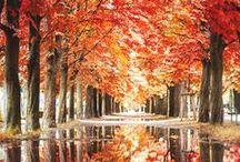 Couleurs d'automne / Les tons orangés des paysages d'automne, les odeurs de cannelle, la douceur du velouté de potiron.