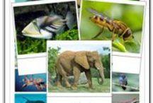 Zoo/Animal Theme