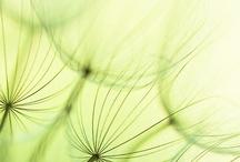 Verde que te quiero verde!