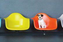 FETCH / Cute furry dogs / by A. Ramirez