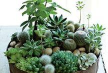 Succulents & Earth Friends / by Désirée Delphine