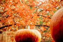 Autumn / The falling leaves, crisp air, cozy sweaters and pumpkin spice make life perfectly nice.  / by Caroline White