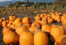 Fall in Surrey / Though the sun may not shine as strong as it did in the summer, #SurreyBC in the fall is bustling with events and activities. Here are some festivities to get you in the mood for all things pumpkin. #TrueSurrey