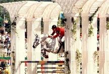 Equestrian Dreams...