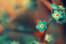 f l o r a l / Flowers, leaves, etc. / by Hadeel Omer
