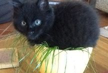 Baby Brambles / Found under a blackberry bush at 4 weeks old in 2014. A very lucky black cat truly loved & only a tiny bit spoilt