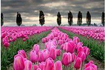 Seasons- spring