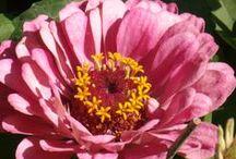 GARDENING, PLANTERS & ETC. / HOW YOUR GARDEN GROWS, PLANTER IDEAS,  BIRD HOUSES AND FEEDERS / by Liz Herceg-KELLY