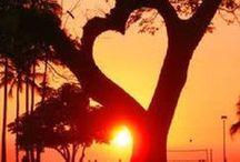 Hearts / HEARTS, everywhere, nature, handmade, / by Liz Herceg-KELLY