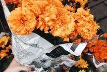 Flowers / Она как дикая роза, а мне больше по душе садовые сорта. Донна Тартт «Тайная история»