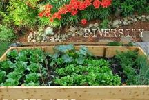 Gardening ideas / by Carrie M.