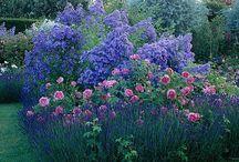 Garden / by Sierra Rumary