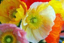 FLOWERS / by Robin Carlson