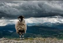 Lake District Wildlife
