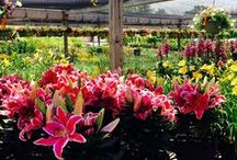 Spring has Sprung / Find out what's happening at Sawyer Home & Garden Center!