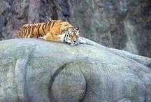 Where the Wild is / Wild Animals / by Robin Elise Ruiz