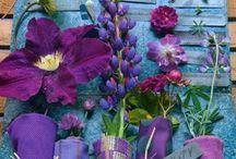 Pretty in Purple / ~•Purple•~ / by Sierra Rumary