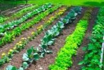Gardening Tips / Tips and ideas on taking care of your garden and keeping away pests.