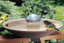 For The Birds / Everything you need for your feathered friends! Plus tips and tricks to help make being a bird lover easy!