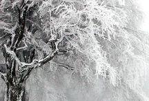 Winter wonderland / Snowy snowy or brrr Its cold outside / by Robin Elise Ruiz