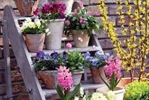 OUTDOORS~ Spring & Summertime / OUTDOORS~ Pretty flowers, gardening, front porches, landscaping, etc., 'Love yourself, even a little bit each day, and your life will bloom into infinite joy.' ― Amy Leigh Mercree
