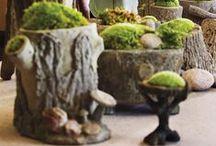 Gardens, Plants & Flowers / Gardens & gardening, plants, pots, and floral arranging, moss, flower arrangements, fountains etc
