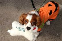 Pets at the Hawthorne Hotel / The Hawthorne Hotel is known far and wide as a pet-friendly hotel.  Because of that, regular guests come year after year with their dogs, cats, and turtles...yes, turtles!