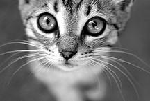 Cats! / by Kathryn Gonzalez
