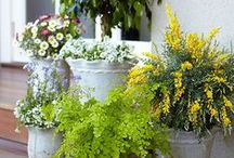 Gardening...Potted Plants
