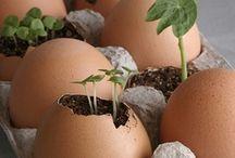 Gardening...Tips & Tools