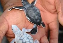 I <3 Sea Turtles / Dedicated to raising awareness to keep the ocean safe for sea turtles!