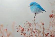 Birds....  / Definitely on a bird kick lately... / by Rebecca Lindsay