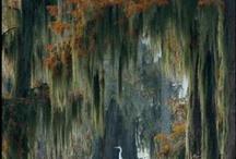 My Louisiana / by Beth Puckett Castello