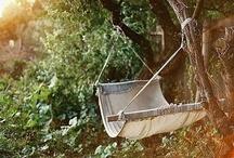 Lawn & Garden  / by Deborah Koiner
