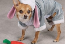 Petlook / #abbigliamento #cani #ecommerce #dog #dogclothes #petlovers http://www.petlook.it