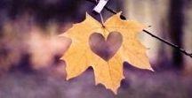 Herbst Basteln / Wir lieben den Herbst in meiner Familie - denn da steht das Herbst basteln an. Mit Kindern und Kleinkindern macht mir das besonders viel Spaß. Wir basteln Fensterbilder, Fensterdeko, Wanddeko oder Tischdeko aus Kastanien, Eicheln, Blättern, Holz oder Tonpapier - hauptsache einfach und bunt!