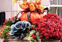 Container Gardens - Fall