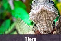 Tiere - Terrarium / Bilder aus Terrarien. Schlangen, Spinnen, Echsen, Amphibien und auch einige Fische.  Terrarium Pictures: Snakes, lizards, spiders, amphibians and some fish.