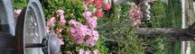 Urns and Outdoor decor / by Serendipity Refined .
