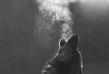Be like a wolf.
