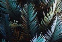 jungle <3
