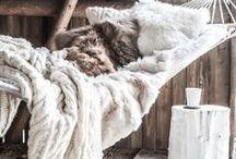 тнє вєαυтιfυℓ ℓιfє...ωιитєя / Enjoying the simple things in life...getting comfy and cozy!