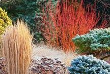 Plants and plant combinations / Plants, trees, and nice plant combinations