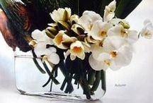 Flowers / by Pip Spiro