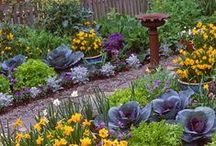How Does Your Garden Grow / Outside living space, planters, general ideas