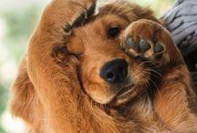 Fur friends ❤️