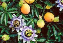 Fleurs d'avoir à la maison / Flowers for your home