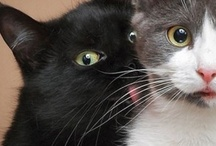 Silly Crazy Wunnerful Cat Stuff / Da best of da kittehs on da net!