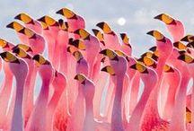 Birds / Yep, my favourite kind of animals. Simply LOVE BIRDS!