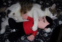 Cats wif Star Trek or Star Trek Cats (der all geek to me)